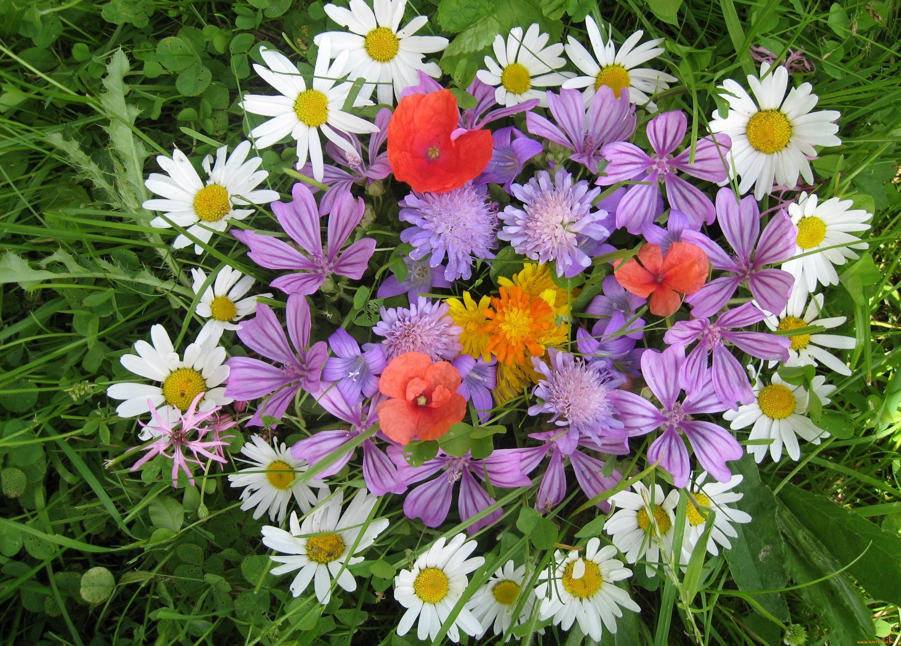 предъявления претензии полевые цветы большие картинки день, ваш